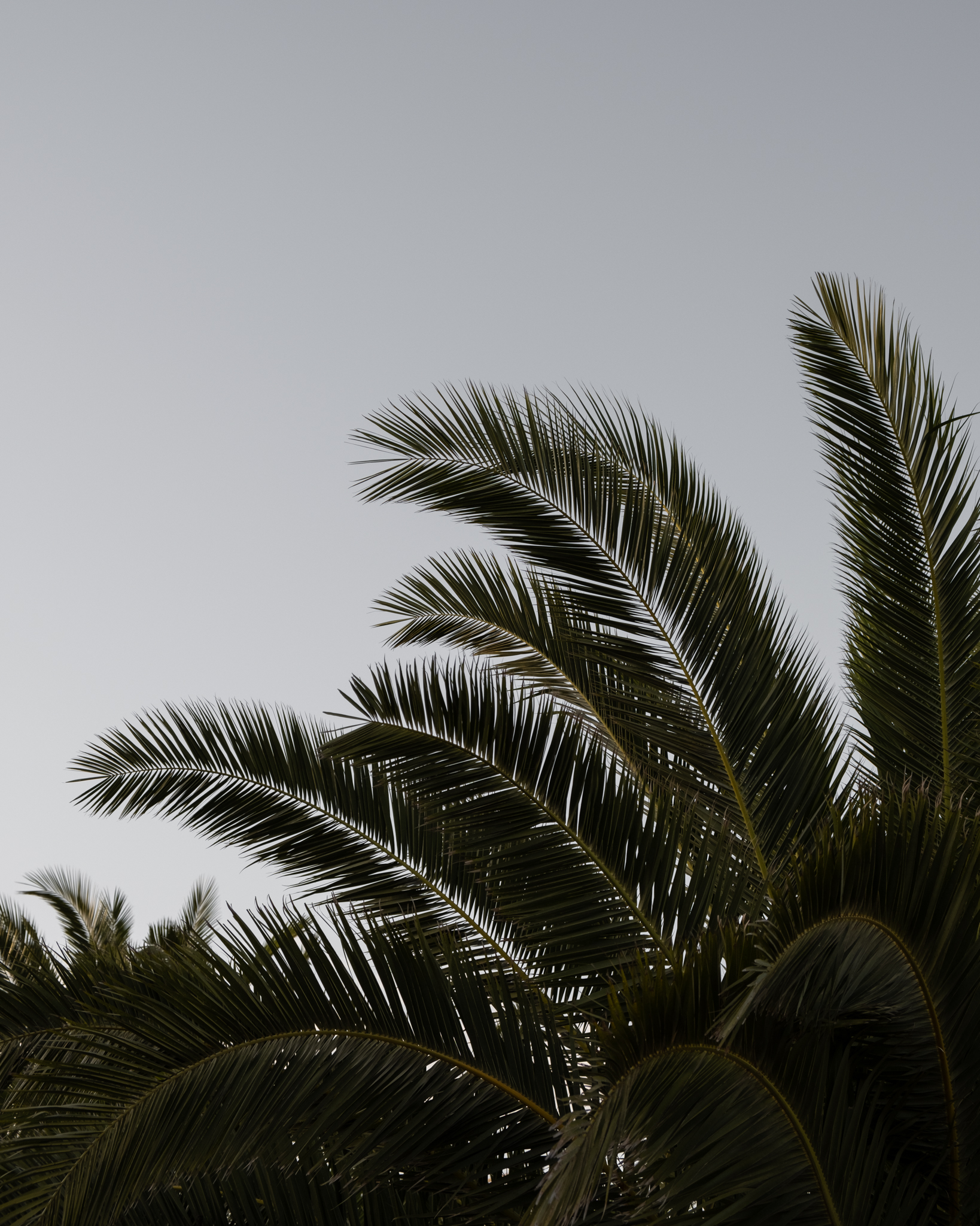 palm trees summer wallpaper